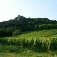 Bodenaktivator bei steilen Weinberg