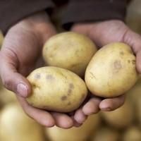 Ertragreiche Ernte durch Bodenaktivator Kopie